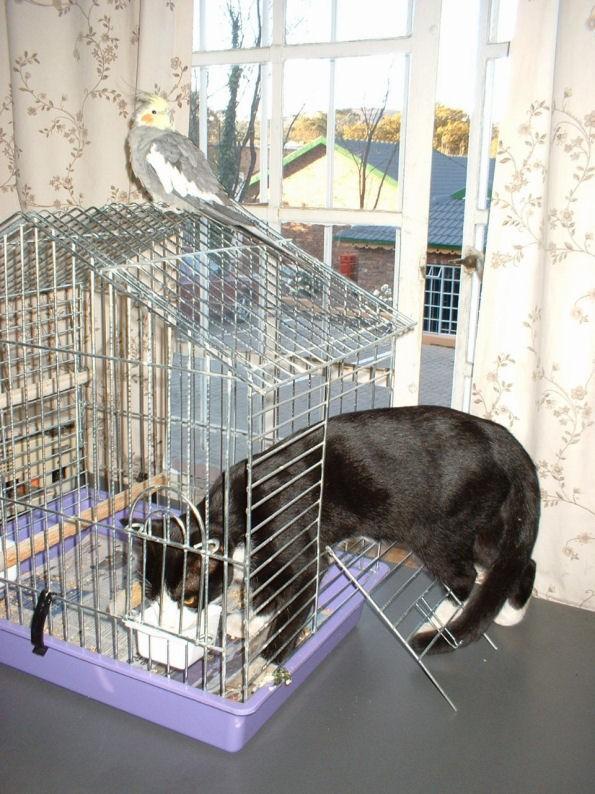 animales-graciosos-gato-jaula-pajaro