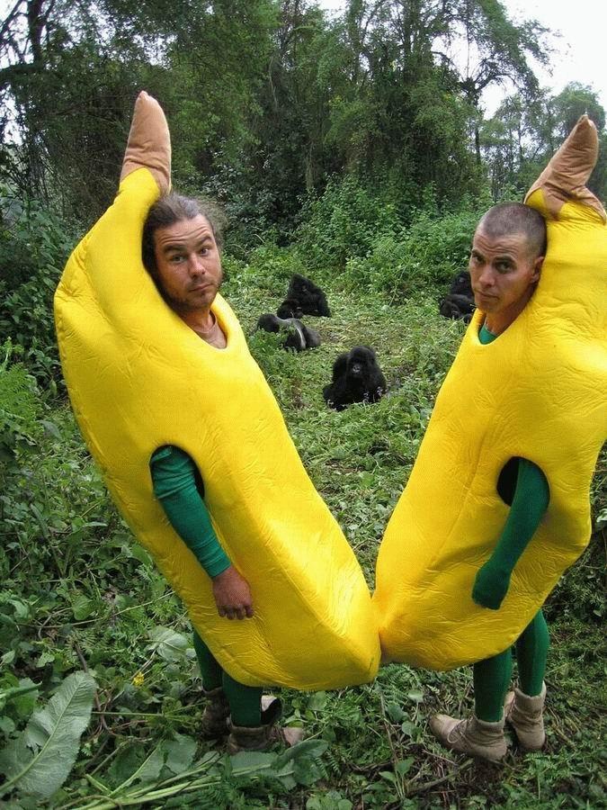 animales-graciosos-gorila-banana