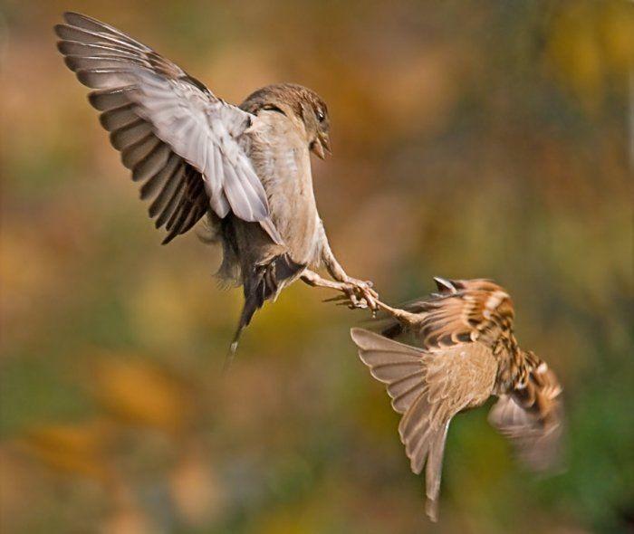 animales-graciosos-pelea-pajaros