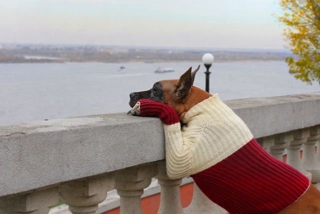 animales-graciosos-perro-modelo