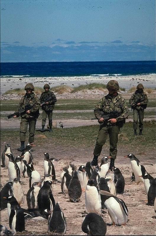 animales-risa-humor-pinguinos-soldados