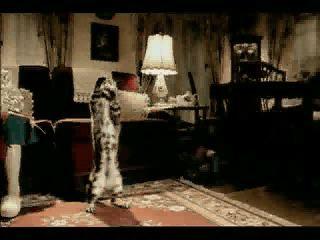 bacardi-breezer-anuncio-ad-advert-gato-cat