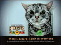bacardi-breezer-gato