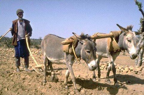 burros-etiopia-carga