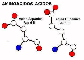 proteinas-aminoacidos-acidos