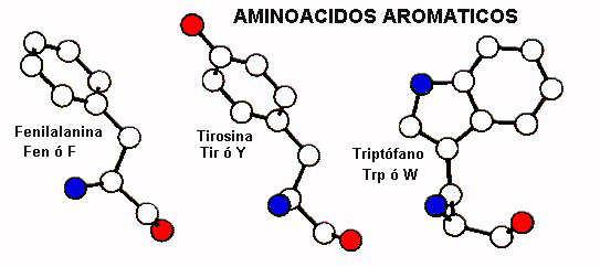 proteinas-aminoacidos-aromaticos
