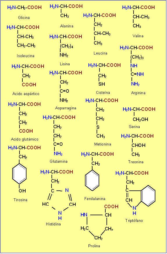 proteinas-aminoacidos-coleccion