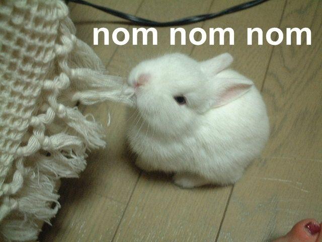 animales-humor-conejo-comiendo-mordiendo