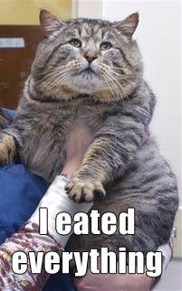 animales-humor-gato-gordo-obeso