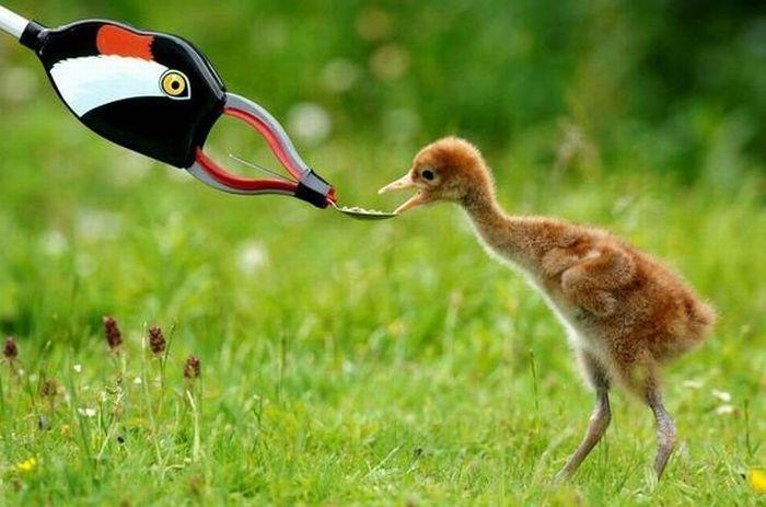 animales-humor-mama-falsa-pato