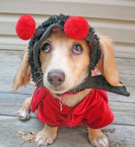 animales-humor-perro-vestido