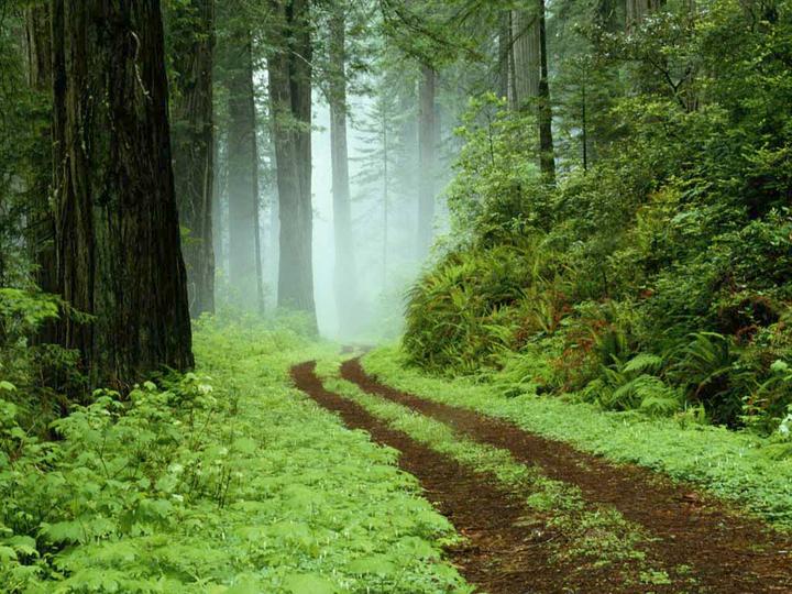 bosque-medio-ambiente