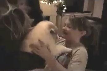 cachorros regalos navidad perritos video