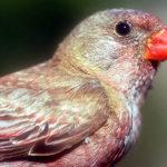 ¿Es verdad que las migraciones de las aves anuncian cambios?