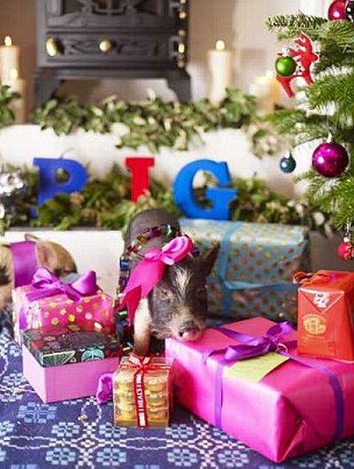 cerditos navidad