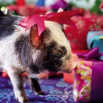 cerditos navidad 11
