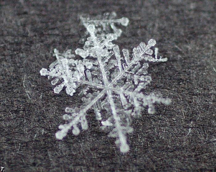 copos de nieve fotos fotografias imagenes