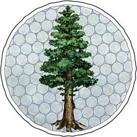 ecologia-movimiento-ecologismo