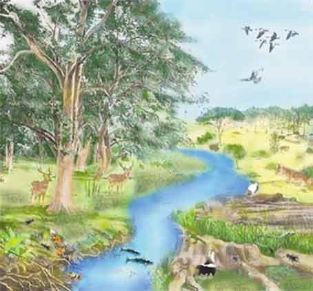 ecologia naturaleza