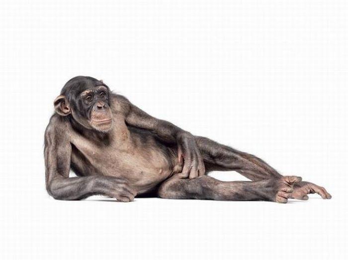 fotografias animales Andrew Zuckerman chimpance