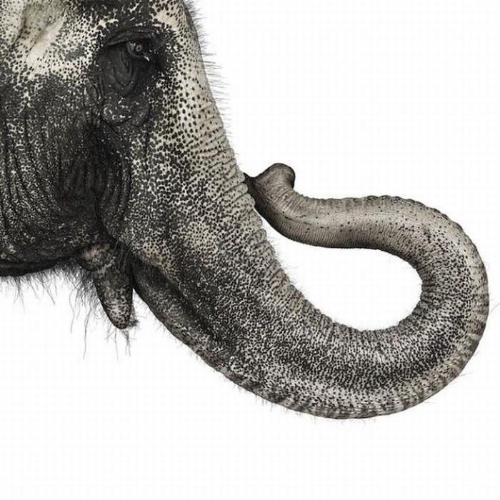 fotografias animales Andrew Zuckerman elefante