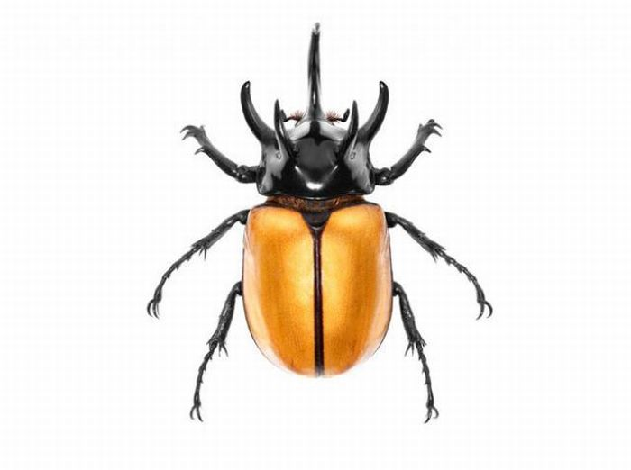fotografias animales Andrew Zuckerman escarabajo