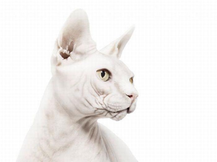 fotografias animales Andrew Zuckerman gato