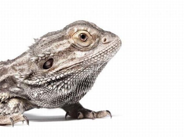 fotografias animales Andrew Zuckerman iguana