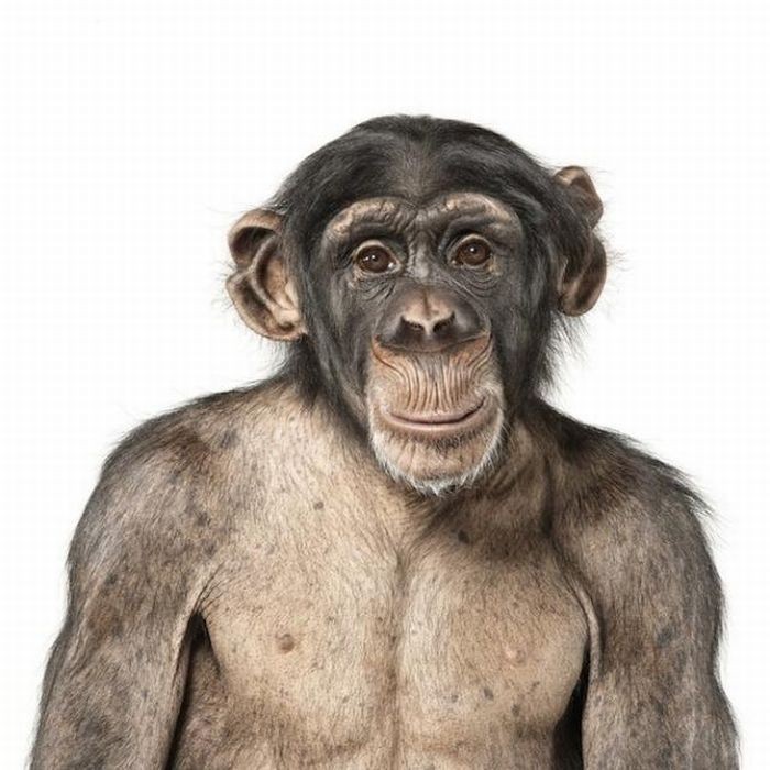 fotografias animales Andrew Zuckerman mono