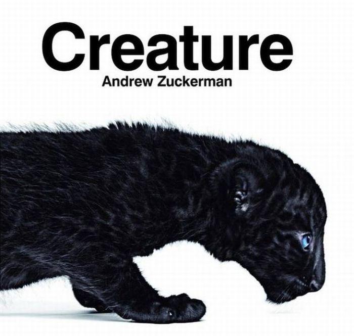 fotografias animales Andrew Zuckerman pantera creature
