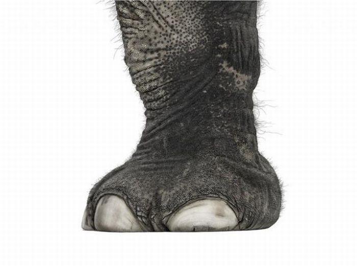 fotografias animales Andrew Zuckerman pata elefante