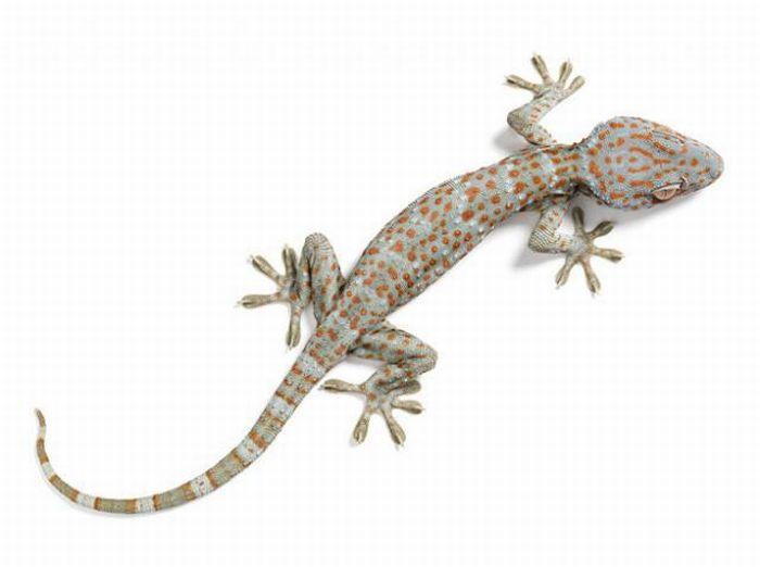 fotografias animales Andrew Zuckerman salamandra