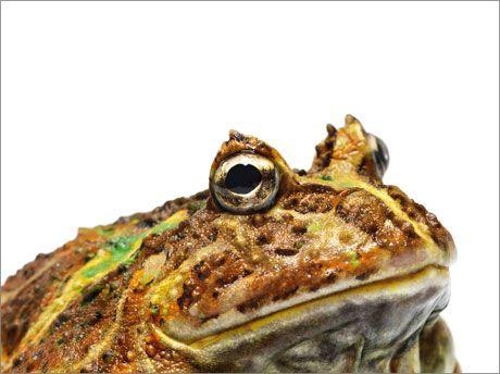 fotografias animales Andrew Zuckerman sapo