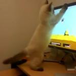 Gato jugando a cazar con un monitor