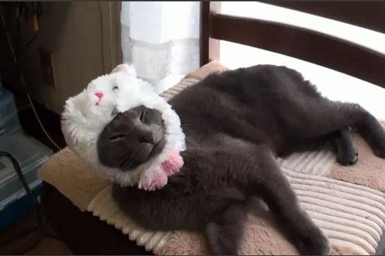gato vistiendose gorrito video
