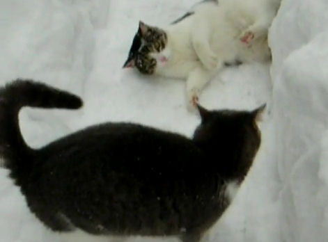 gatos jugando nieve