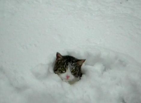 gatos metido nieve