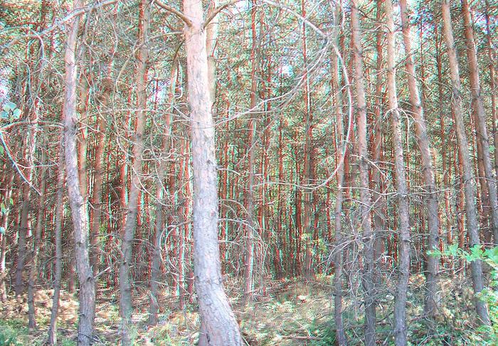 imagen 3D bosque forest