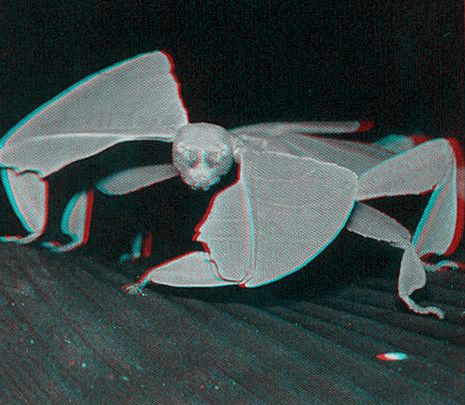 imagen 3D insectos bugs