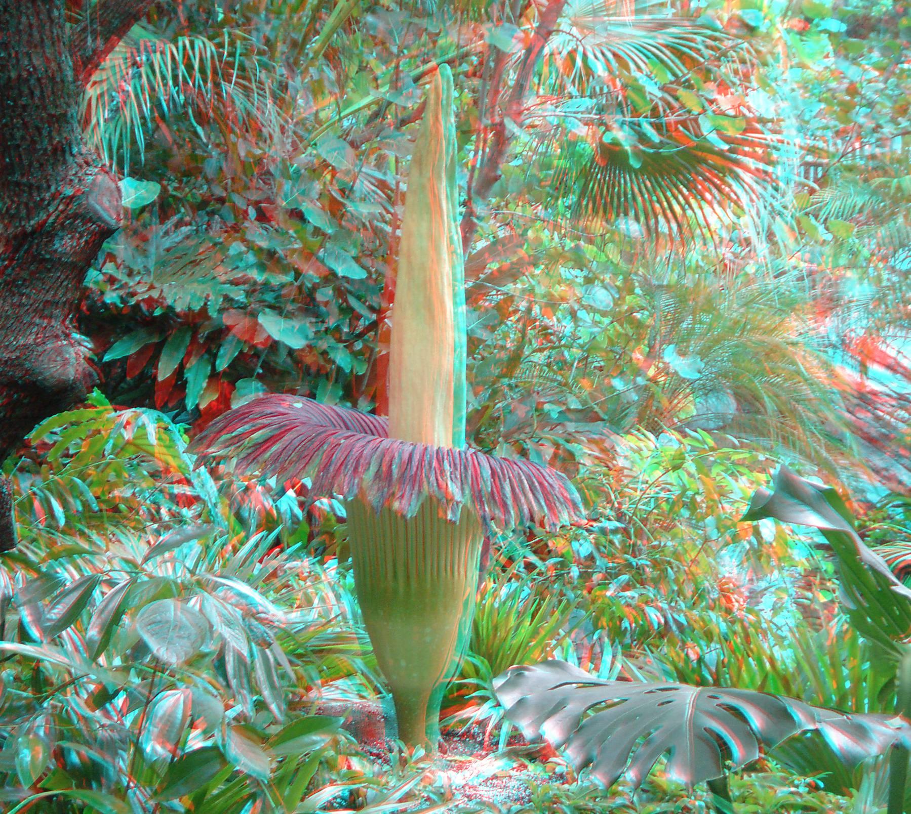 imagen 3D planta canivora corpse plant