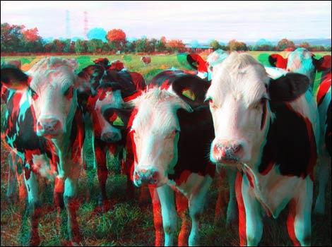 imagen 3D vacas cows