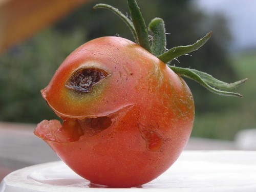 imagenes-graciosas-tomate-asesino