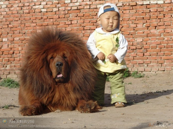 imagenes humor internet chow chow