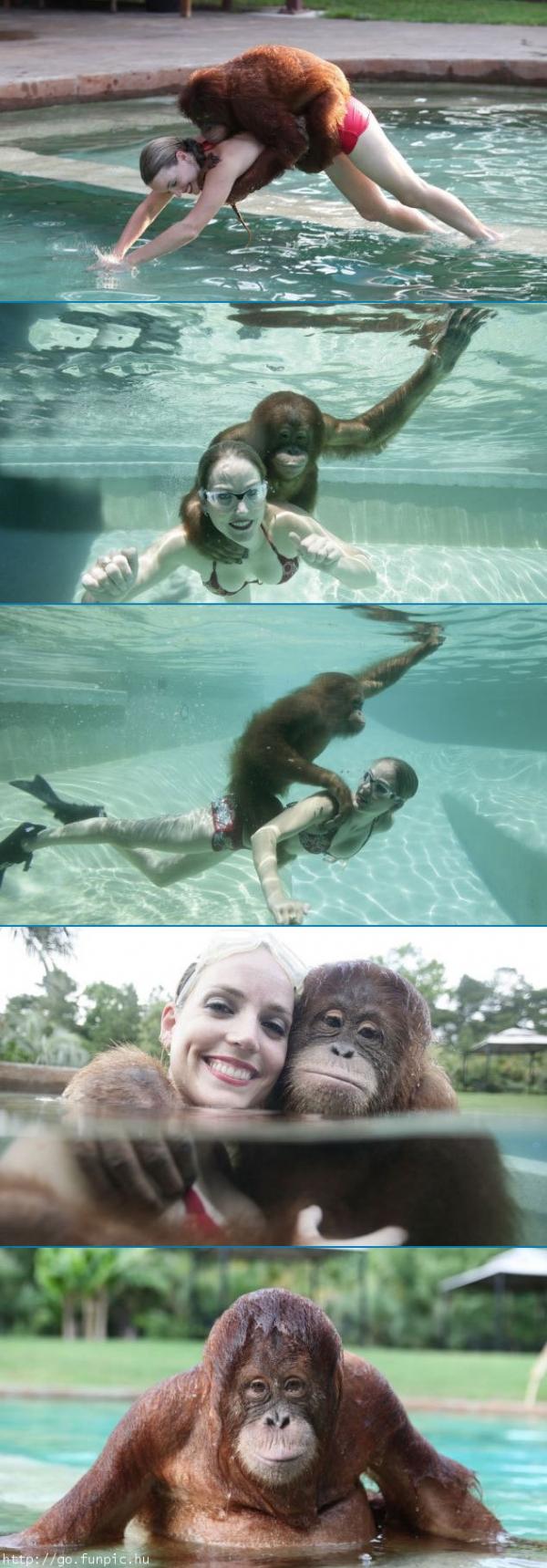 imagenes humor internet orangutan nada