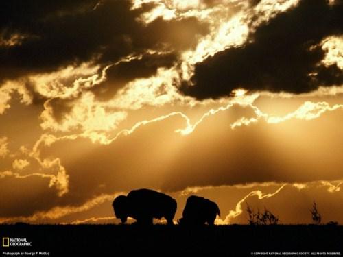national geographic imagenes naturaleza