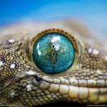 national geographic imagenes naturaleza-16
