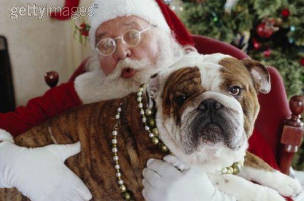 santa claus papa noel bulldogs