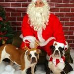 Papá Noel con bulldogs