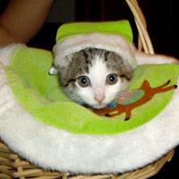 santa claus papa noel gatos vestidos navidad