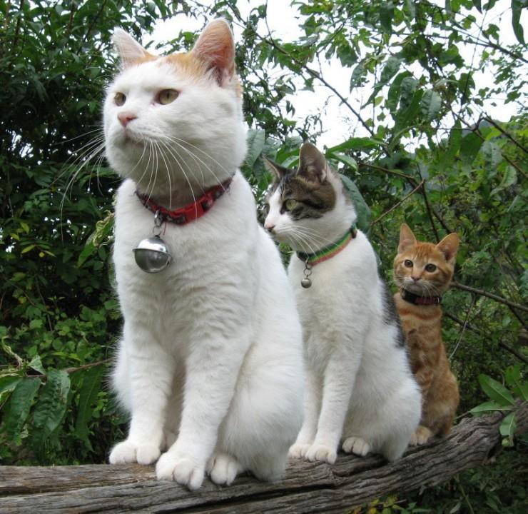 animales-bonitos-gatos